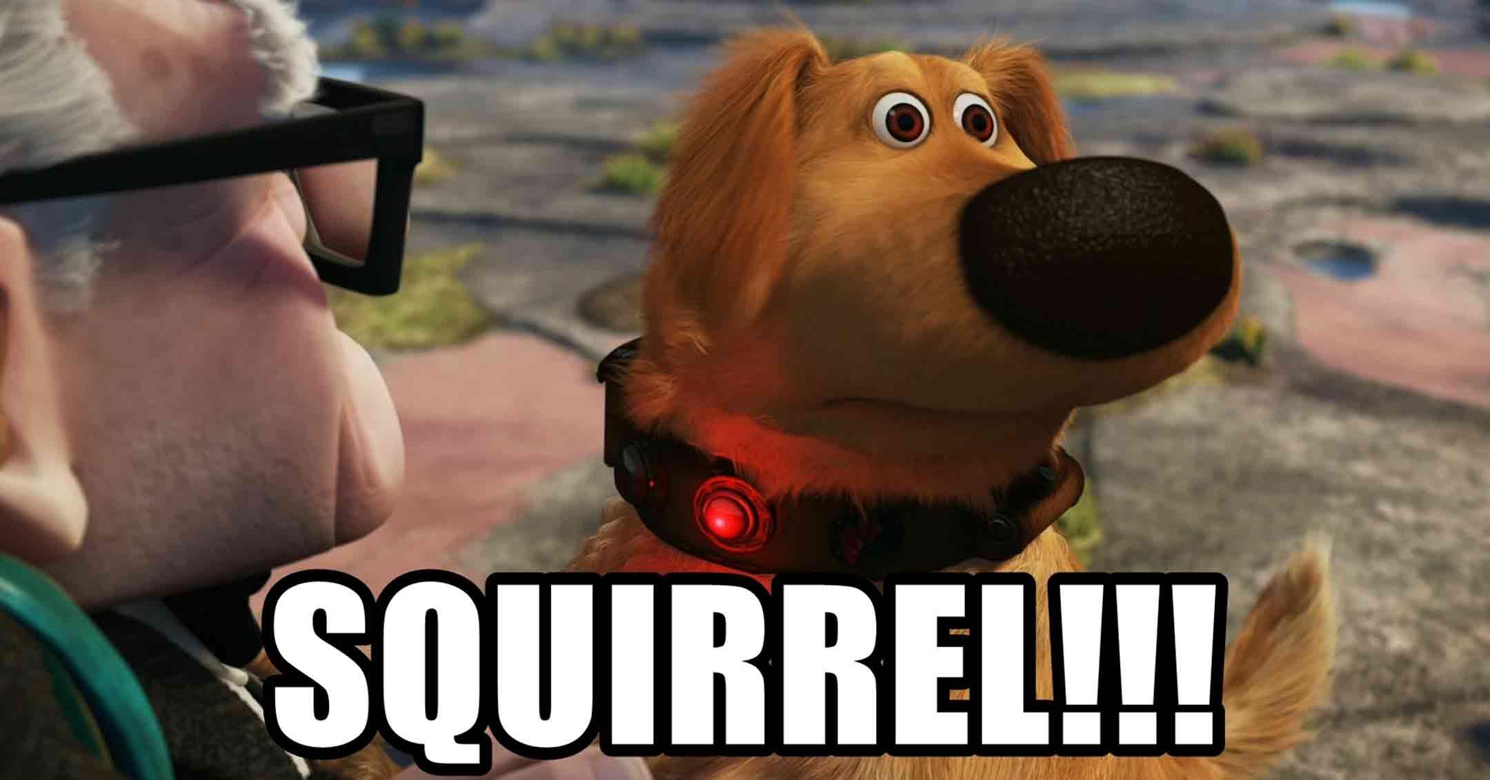 Squirrel! | MouseMingle.com